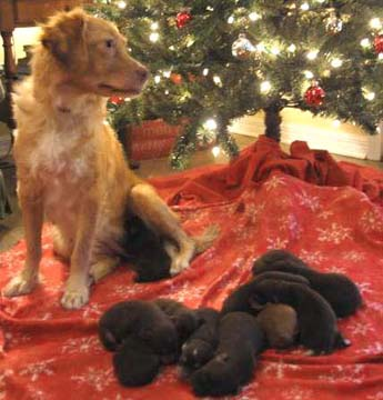 Andi and Pups Christmas